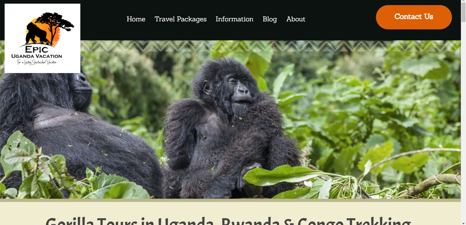 Great Apes Tours